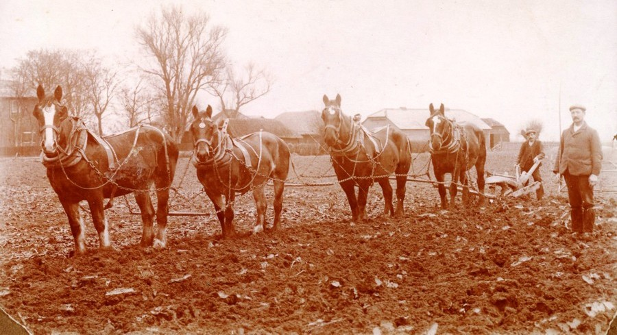 4 horses ploughing ground at Brooker Farm