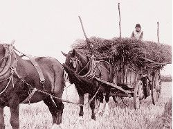 Mrs Winnie Wimble on hay-cart c.1935.